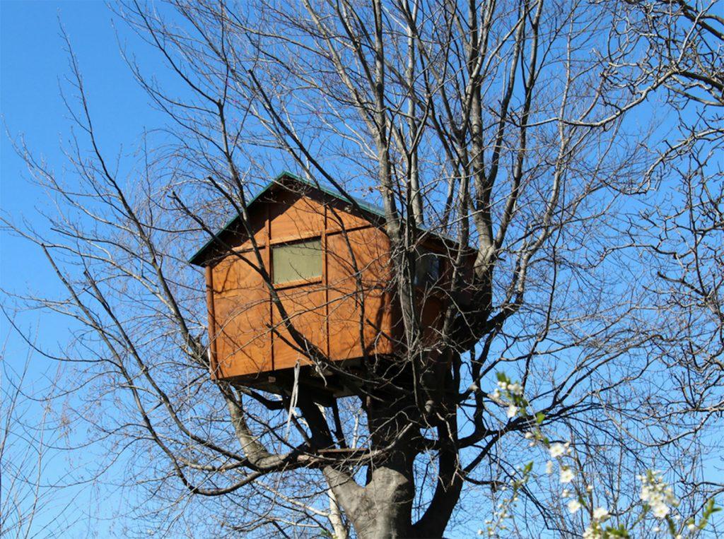 casette di legno per alberi